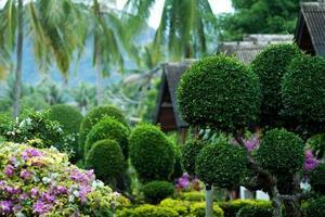 tropisk vegetation foto