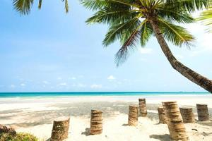 trästolstol och kokospalmer på stranden foto