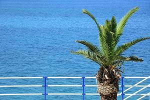 havet och en palm - utväg foto