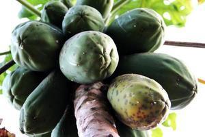 papaya på handflatan