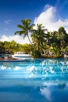 solstolar i tropisk resorthotellpool foto