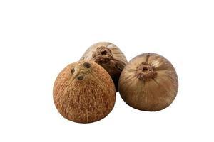 närbild av färsk kokosnöt foto