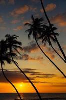 palmer och sol foto