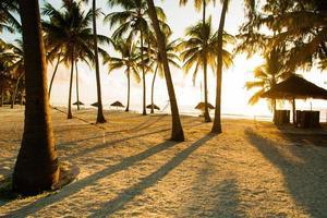 hängmatta, hyddor och palmer i tropiskt paradis foto