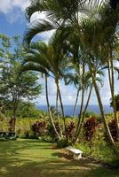 palmer vid en tropisk trädgård i hawaii
