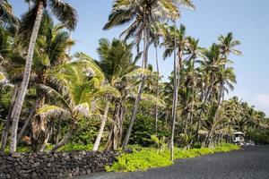 usa - hawaii - stor ö, punaluu foto