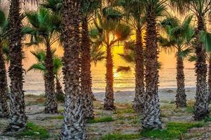 solnedgång på tropisk strand foto
