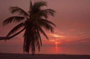 palmer på stranden vid soluppgång.