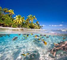 tropisk ö foto