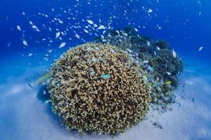 under vattnet foto