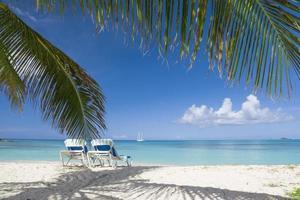 palmträd och stolar på en strand med nära det blå vattnet foto