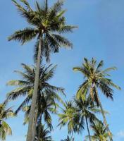 palmträd foto