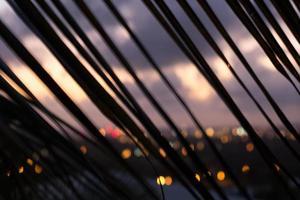 palmgren silhuett vid solnedgången - diagonala linjer foto