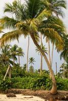 palmer på tropisk strand i colombia, amerika sur