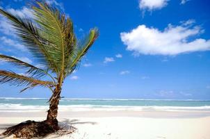 palm på stranden foto