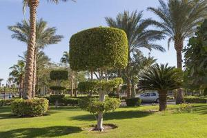 dekorativ gräsmatta i Sharm el-sheikh, Egypten foto