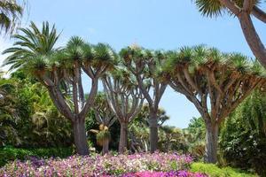 tropisk vegetation