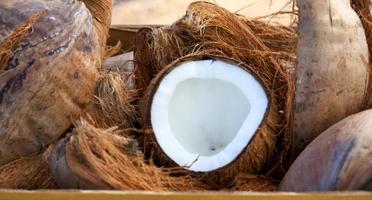 färsk kokosnöt foto