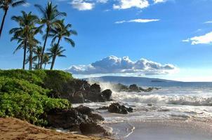 tropisk hawaiisk strand foto