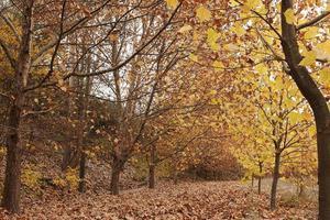 höstens trädbakgrund