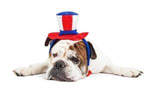 trött hund som bär amerikansk festhatt foto