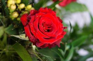 rosor och hjärtan iii foto