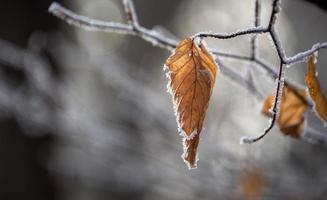 torra löv på vintern foto