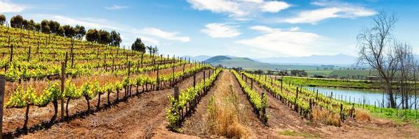 panoramautsikt över vingården foto