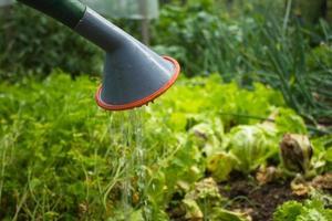 vattenkanna droppande vatten på grönsaker