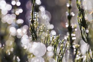 vattendroppar, gräs foto