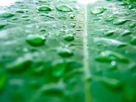 vattendroppe på grönt blad