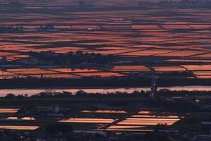 solnedgångsglöd av risfält