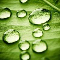 grönt blad med droppar vatten