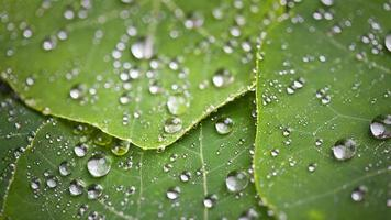 vackra gröna blad med droppar vatten