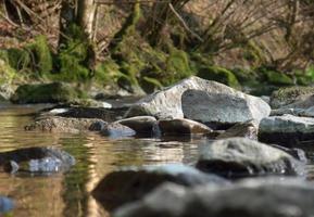 landskap vid floden foto