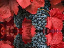 reflektion av druvor i rent vatten. vin. foto