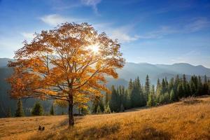 gyllene träd i bergsdalen, höstsäsongslandskap foto