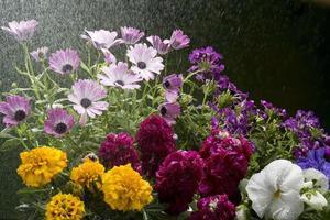 vattna blommor med spray foto