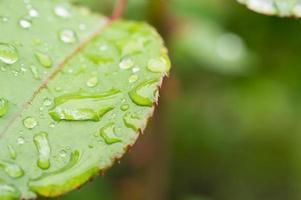 vattendroppar på ett grönt blad