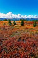 röda träd och ås foto