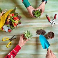 trädgårdsmästare som gör terrarium av suckulenter foto