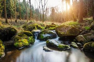 faller på den lilla bergsfloden i ett skog
