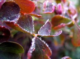 blad och droppar