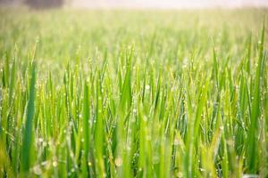 vattendroppar på grönt gräs - grunt dof foto