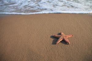 sjöstjärna på stranden foto