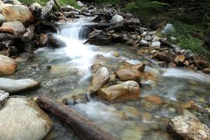 gebirgsbach im urwald von feuerland