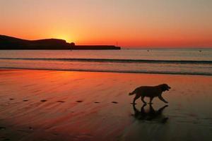hundsilhouette och fotspår på stranden vid solnedgången foto