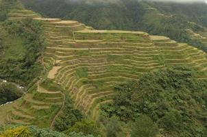 riceterraces i filippinerna foto
