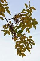 liten gren med färgade löv på hösten
