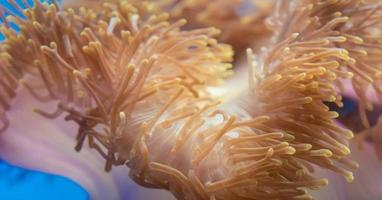 orange havskorall foto